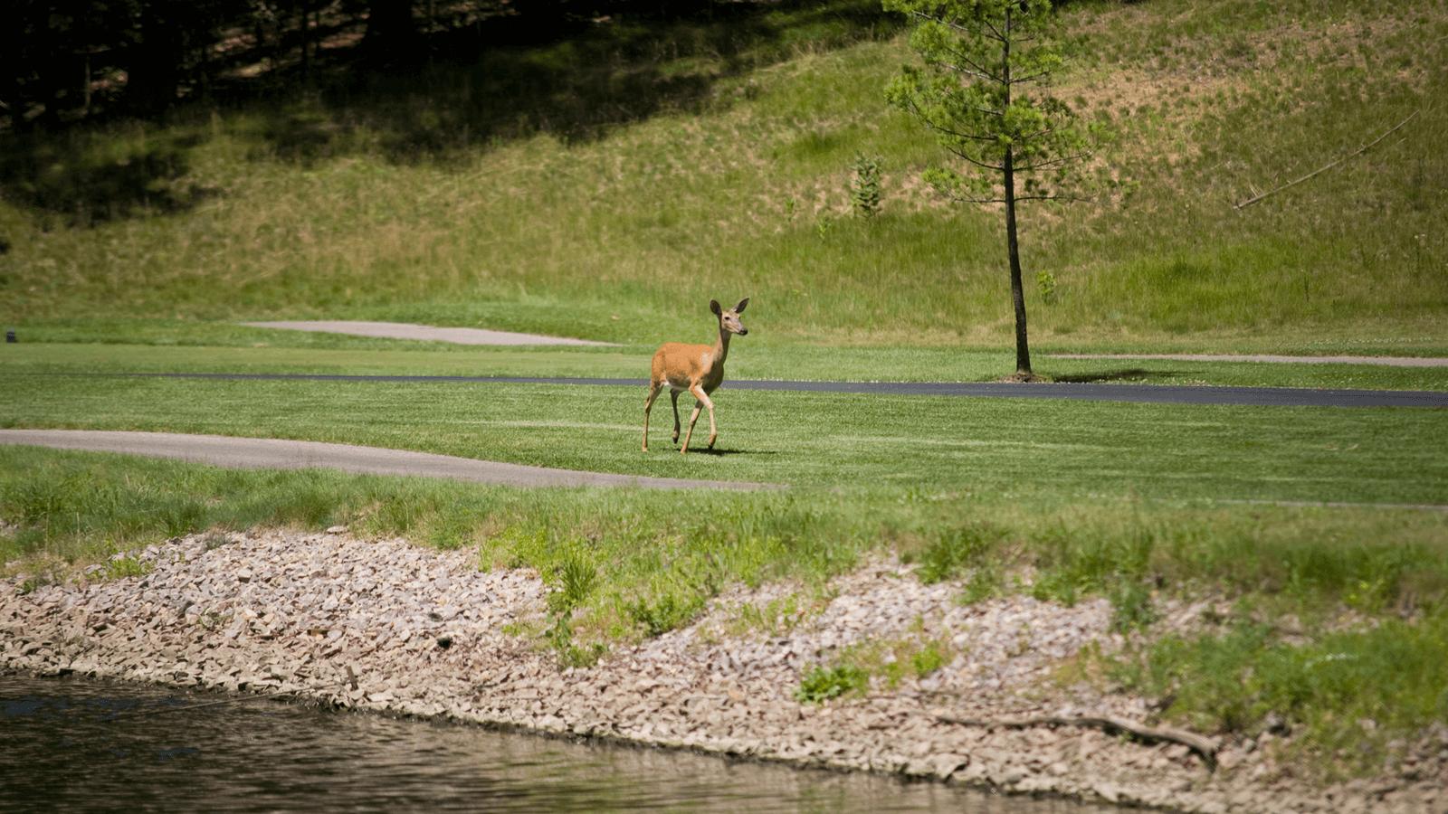 running_deer